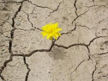 democrazia come un fiore